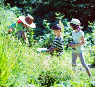 Children gardening in the field.
