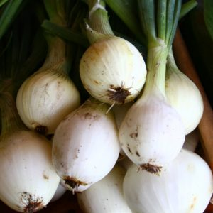 Market Recipe Blog: Grilled & Roasted Walla Walla Onions with Pine Nut Butter